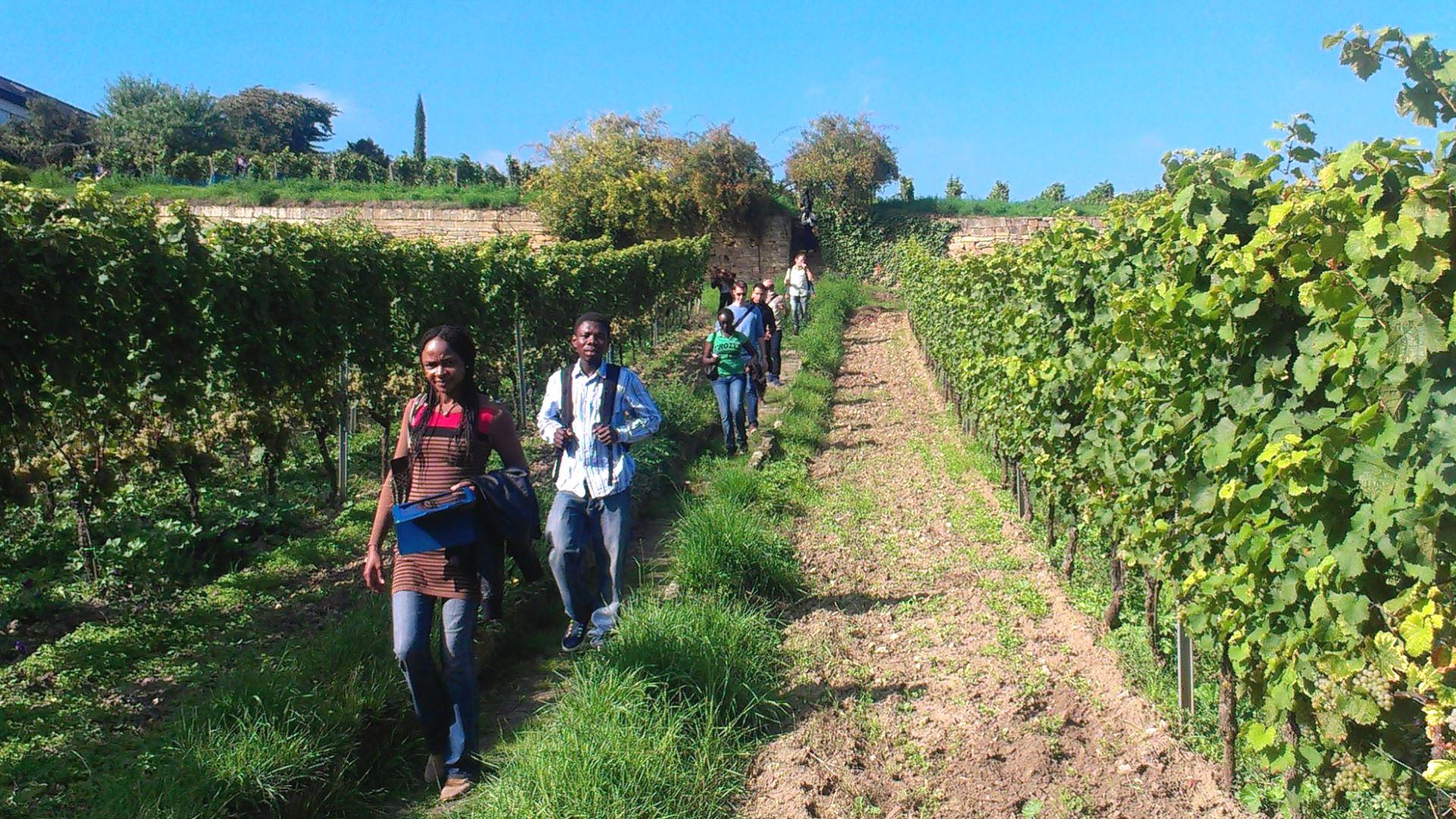 Stipendiaten bei Wanderung im Weinberg